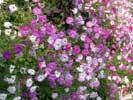 Фото Евпатории - цветы